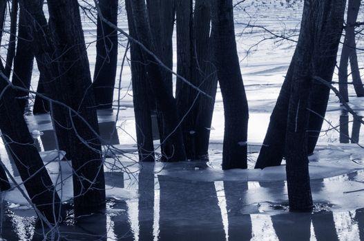 Trees in water, dusk mood