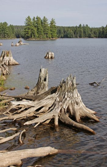 Driftwood and dead stumps on the shores of Burnt Island Lake in Algonquin Provincial Park, Ontario, Canada.