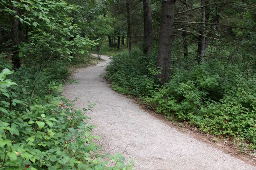 A trail in The Pinery Provincial Park, in Ontario, Canada.