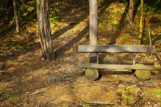 lone wooden bench in the woods