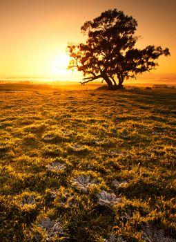 Orange Sunrise Field