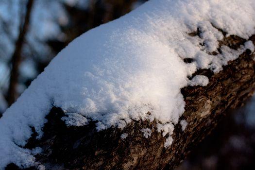 snow bole