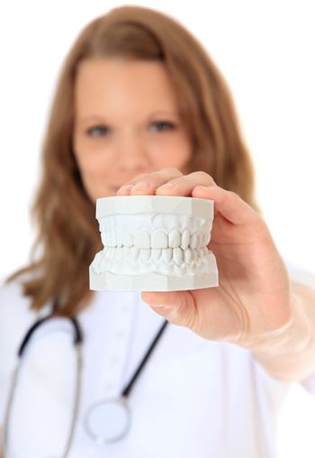 Dentist holding teeth plaster cast. All on white background. Selective focus on hand in foreground.