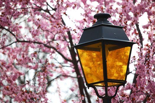 lantern in lilac