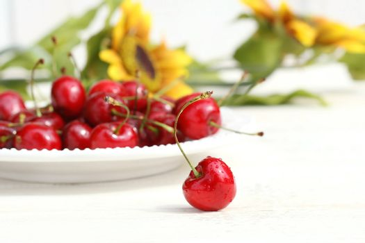 Cherries and sunflowers with white background
