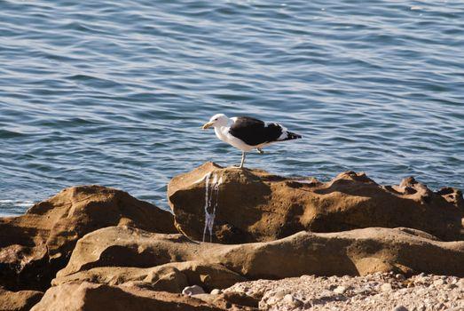 Seagull solitude