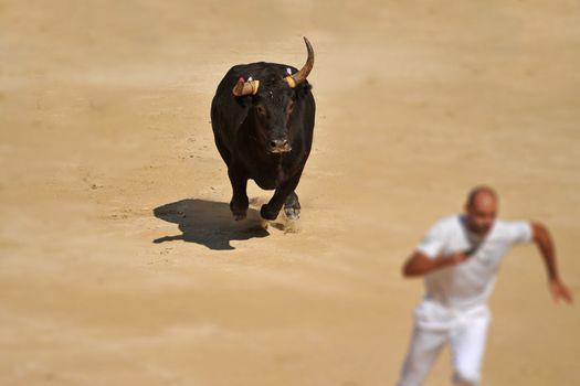 running bull