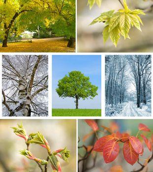set of season landscape