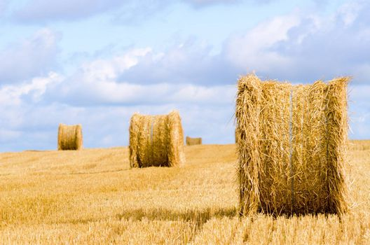 straw roll in harvested field