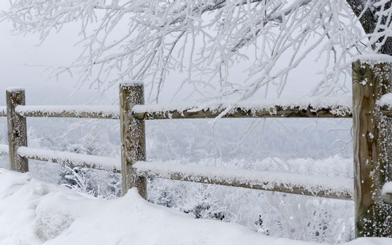 fence and tree coverd with snow