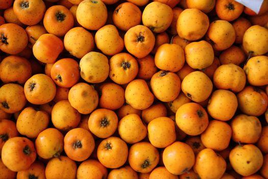 Tecojote winter fruit Crataegus pubescens stipulacea