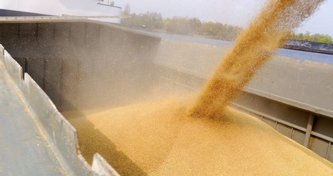 loading barge with a crop of wheat grain