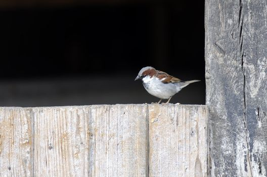 a sparrow on wooden board