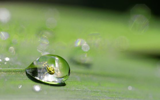a frog in a drop of dew