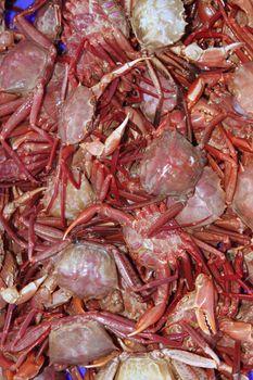 crab from mediterranean sea catch
