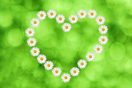 heart made in daisies flower on green background