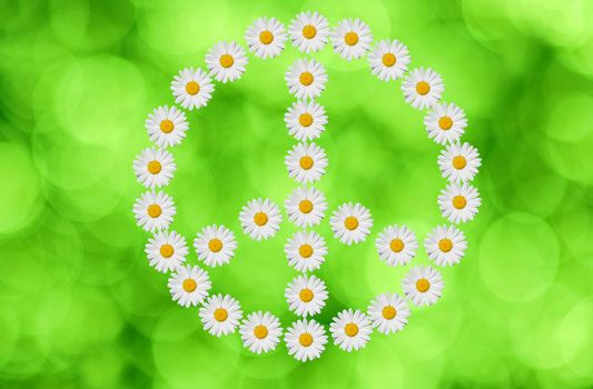 the peace and love  symbol made in daisy flower on green background