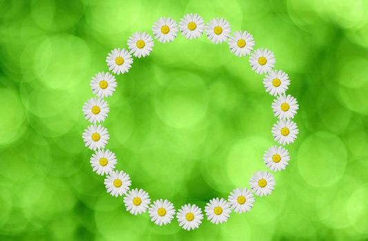 a circle made in daisies flower on green background