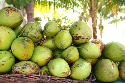 Fresh tender coconuts mound Caribbean Mexico