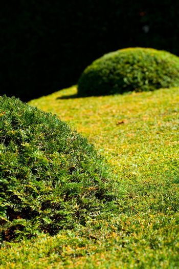 background of the trimmed bushes