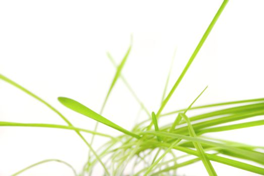a tuft of grass isolated on white