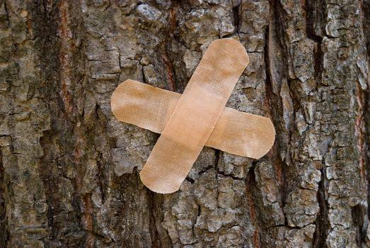 plaster on  tree