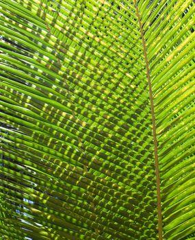 Back light palm leaves