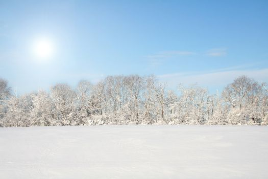 Winter landscape of a field and woods covered with a fresh fallen snow with a blue sky and the sun shining.  Room for copy space.