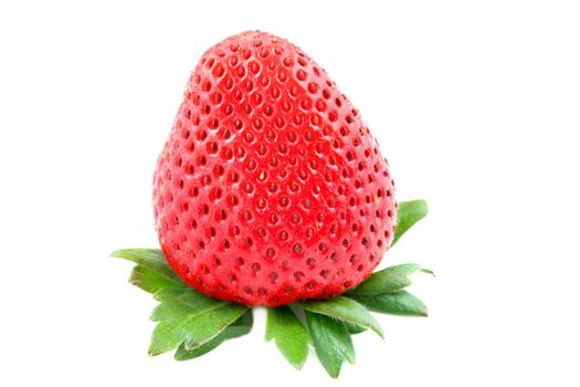 One strawberry isolated on a white background with copy space.
