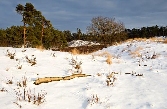 winter in dunes