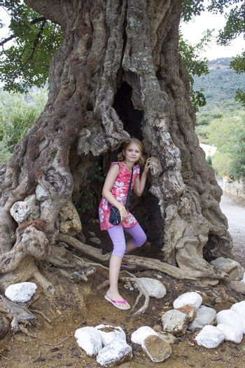 little girl in a big olive tree
