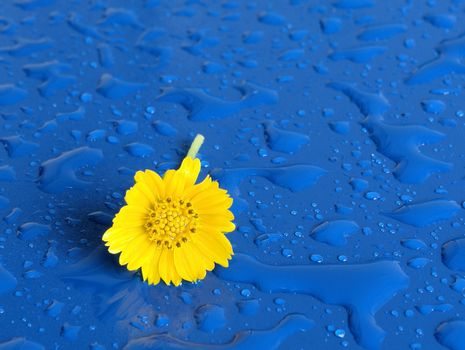 Lone Yellow flower on a rainy day