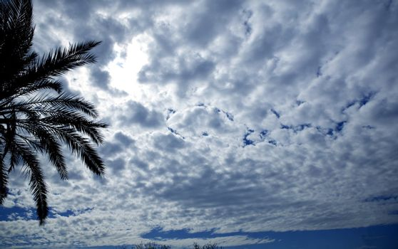 cloudy sky backlight with palm tree
