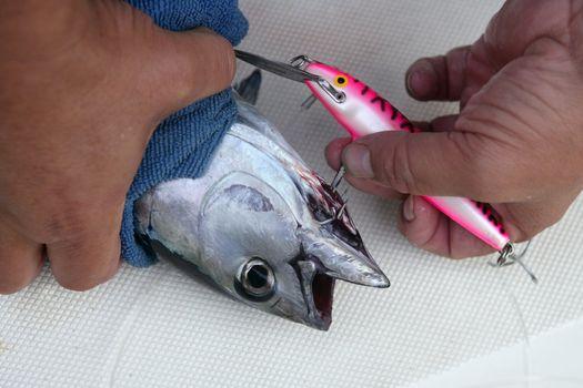 Blue fin bluefin tuna catch and release