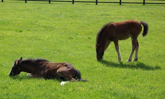 Ponies in a pasture