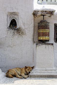 Prayer wheel and dog sleeping at Bothnath stupa in Kathmandu
