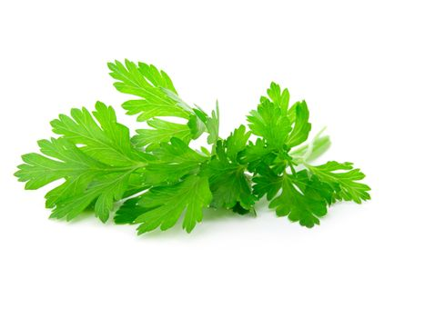 Fresh parsley on white background.