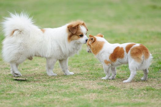 Two dogs staring at each other