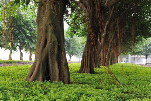 Trees in the garden near urban street