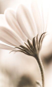 Grunge daisy flower
