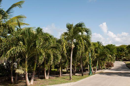 Resort pathway