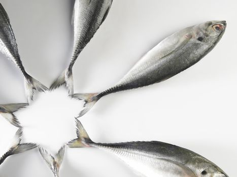 tail part of seven bonito fish on plain background.