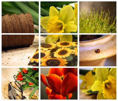 Garden collage of tools, seeds and tulips for planting