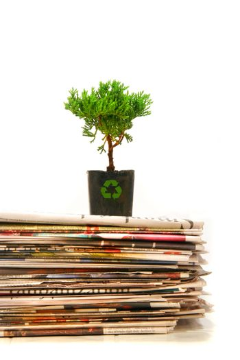 Small plant on top of a pile of newapapers