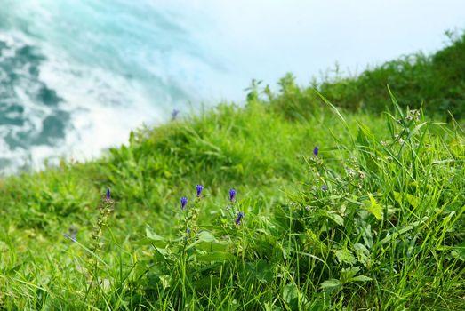 Grass cliff over looking Niagara falls