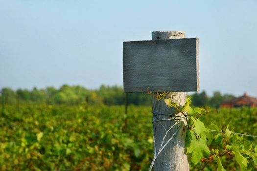 Vineyard wood sign with blue sky