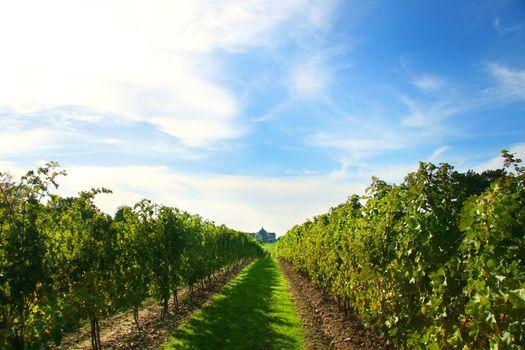 Vineyards on Niagara on the Lake