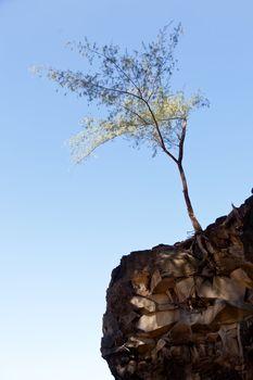 Tree perching on barren cliff face