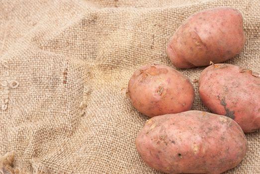 Potatoes on sackcloth