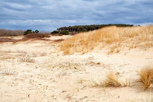 sand dunes by Haarlem